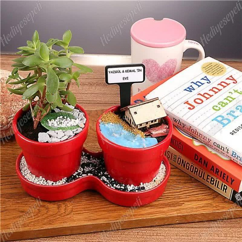 İki Saksılı Minyatür Sukulent Bahçe