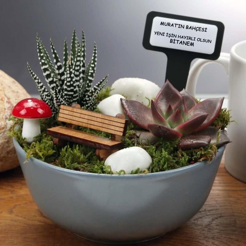 Yeni İş Hediyesi Minyatür Sukulent Bahçesi