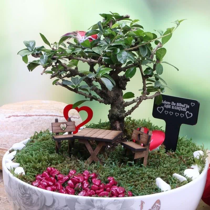 Sevgiliye Hediye Canlı Ağaçlı Minyatür Bahçe
