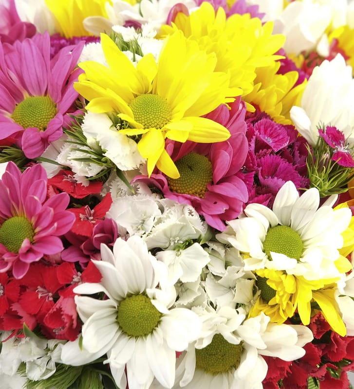 Baharın Mevsim Papatya Çiçekleri