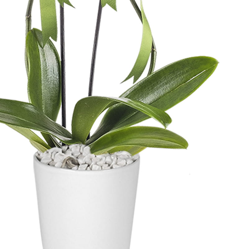 İhtişamlı 2 Dal Mor Orkide
