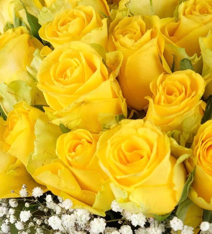 Papatya Bahçesi 50 Adet Sarı Gül