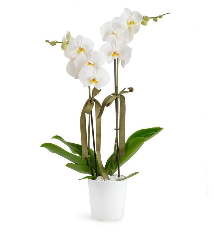 Seramik Vazoda 2 Dal Beyaz Orkide