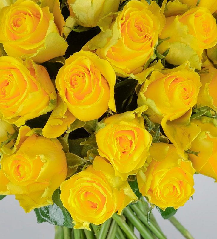 Sevginin Cazibesi Sarı Gül Buketi 50 Adet