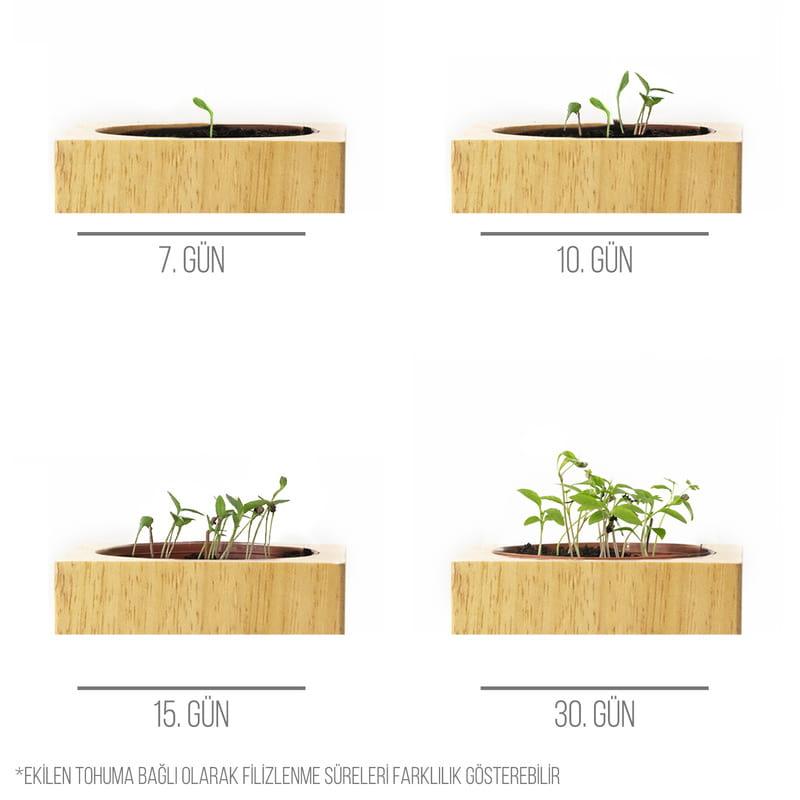 Dünya Pi Günü Tasarımlı Kişiye Özel Tohumlu Naturacube