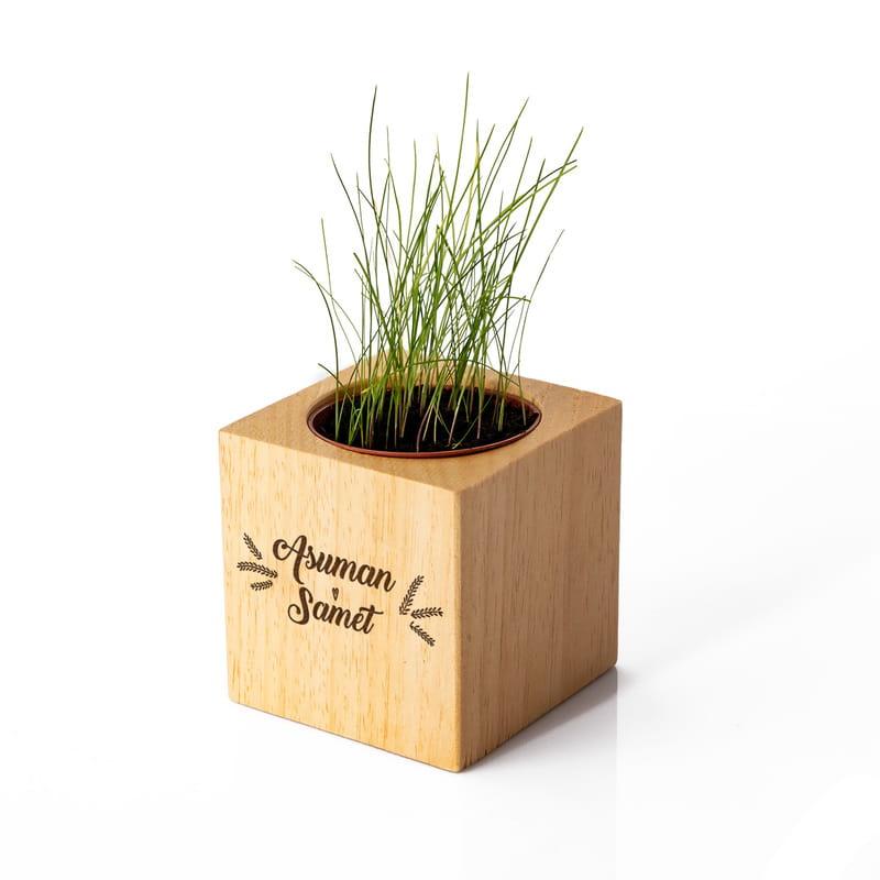 Sevgiliye Hediye Bitkili Naturacube