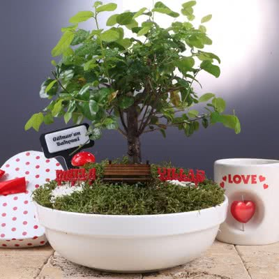 Doğum Günü Hediyesi Mini Bonsai Bahçesi