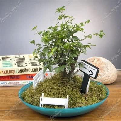 Hediyelik Mini Doğal Bonsai Bahçesi