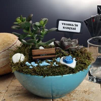 Mavi Saksılı Minyatür Sukulent Bahçesi