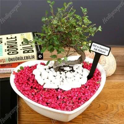 Sevgiliye Hediye Kalp Saksıda Bonsai Ağacı