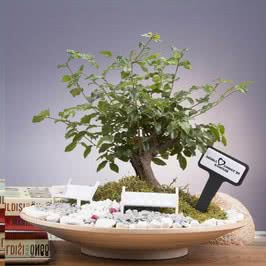 Ahşap Saksıda Minyatür Bonsai Bahçesi