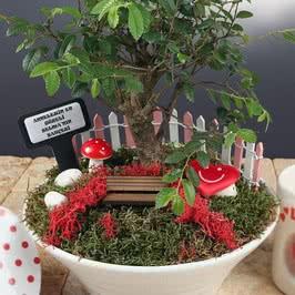 Anneye Hediye Özel Canlı Minyatür Bahçe