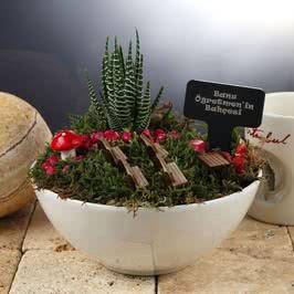Bayan Öğretmene Hediye Canlı Minyatür Bahçe