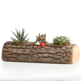 Ahşap Kütük Minyatür Bahçe