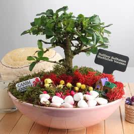 Anneye Hediye Canlı Ağaçlı Minyatür Bahçe