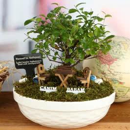 Babalara Hediye Özel Canlı Minyatür Bahçe